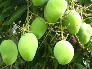 Плодовые деревья советы и практика