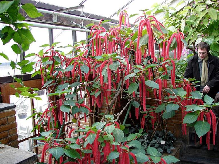 Online определитель комнатных растений