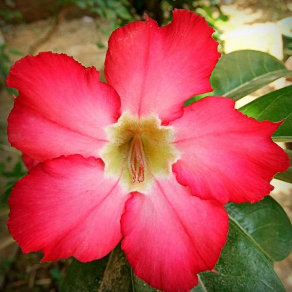 О цветах, всё и всем. Весенние цветы фото и названия по