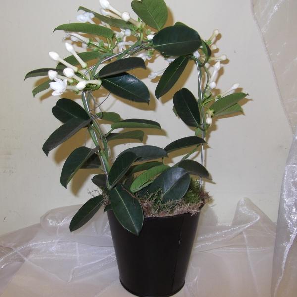 комнатные растения  уход названия