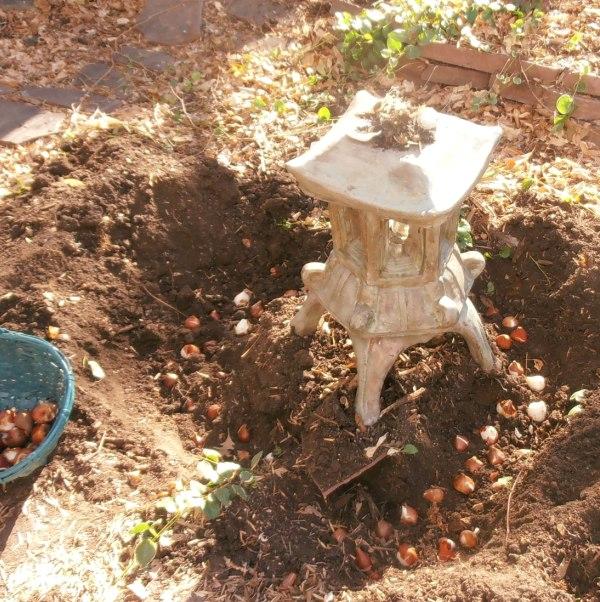 Посадка тюльпанов, как и когда сажать луковицы - Дачные советы 92