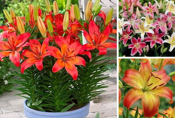 lilii-v-gorchke2