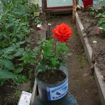 http://orhide.ru/wp-content/uploads/2014/09/0409a-57.jpg