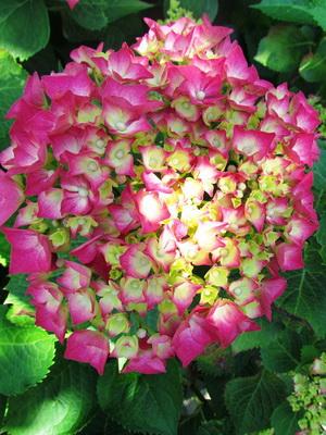 растения вьетнама фото и названия