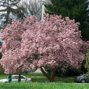 Растения, на которых растут фрукты - Бугага 38