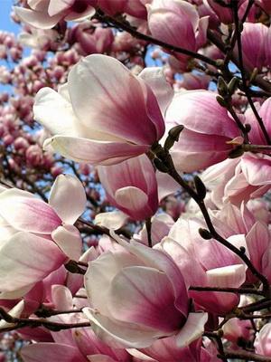 Дерево с белыми цветами своими руками