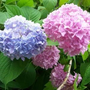 Каталог цветов: названия и фото, описание цветов, виды и сорта 57