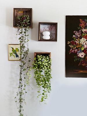 Цветы живые на стене в интерьере