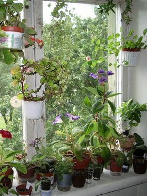 Цветы в горшке фото