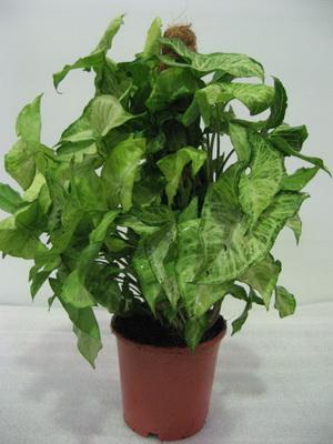 291Цветы домашние зеленые листья как называется