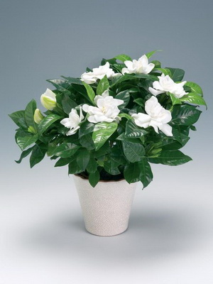 Лесные растения с белыми цветами 92