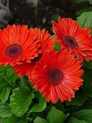 цветы фото красные