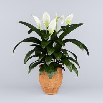 Каталог комнатных цветов (