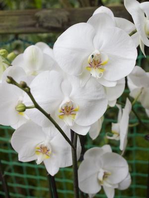 орхидеи фото и названия и