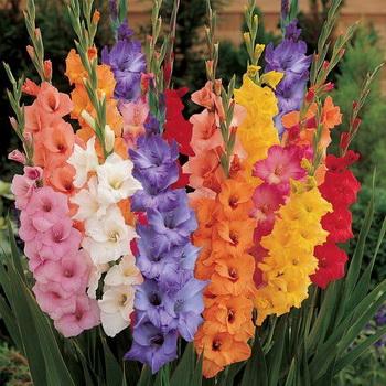 Цветы фото с названиями садовые