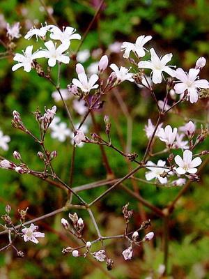 Растения Степной Зоны