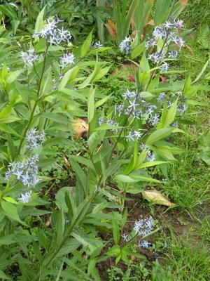 Цветы дикорастущие краснодарского края 65