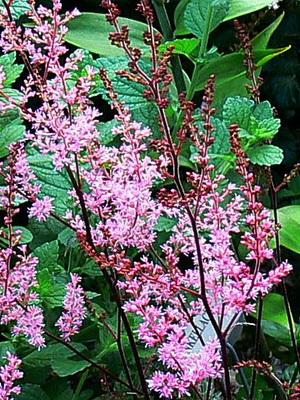 Горные растения