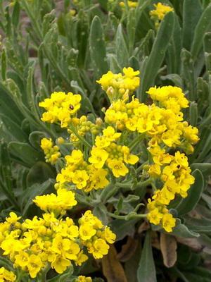 Цветы желтые цветут в июле