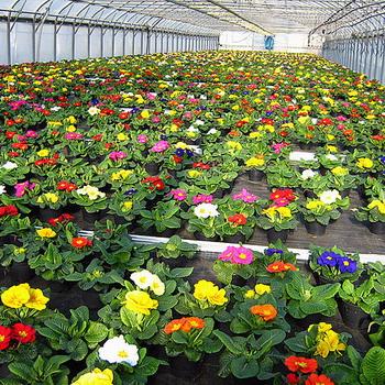 бизнес выращивание цветов на продажу в теплице