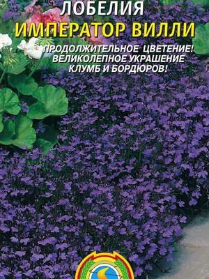 Цветы лобелия