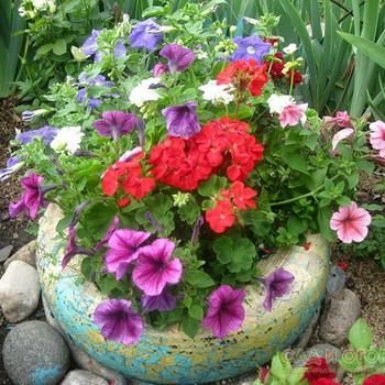 Схема как посадить цветы 801