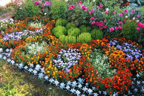 Как рассадить цветы красиво