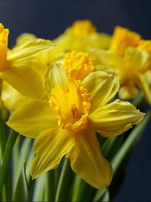 Цветок для широкого горшках