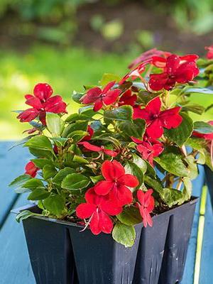 Семена цветов многолетние описание 45