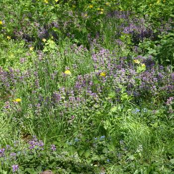 Лесные цветы и травы: фото и названия растений лесной полосы