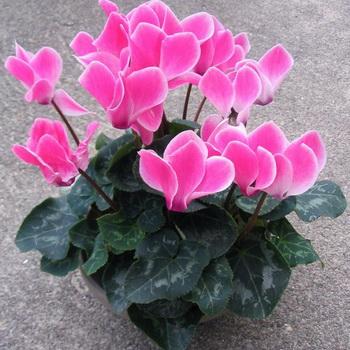 фото домашних цветов и названия