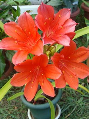Цветы красного цвета на фото
