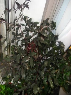 засолка огурцов пошаговое фото