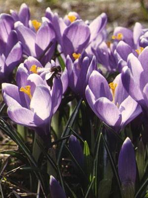 Виды садовых цветов названия и фото 56