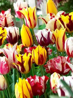 Какие цветы цветут в мае и названия