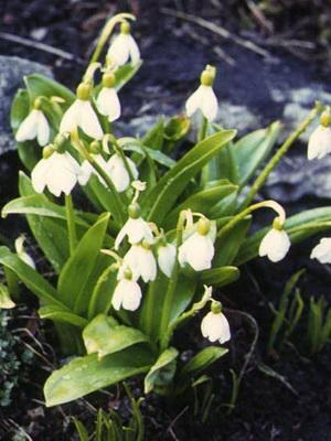 Многолетние цветы неприхотливые для сада фото